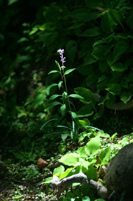 木漏れ日 花 紫 緑 陰 養老