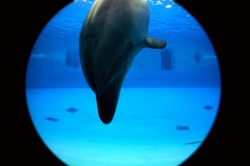 名古屋港水族館 イルカ アップ 青 魚眼 フィッシュアイ