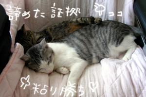biyoukiumi13.jpg
