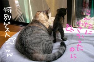biyoukiumi15.jpg