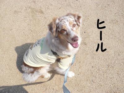 コピー ~ ヒール
