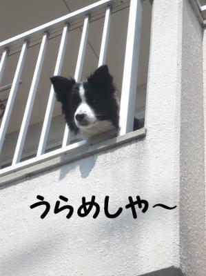 コピー ~ 応援団