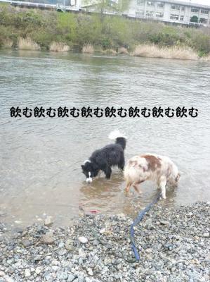 コピー ~ のめのめ
