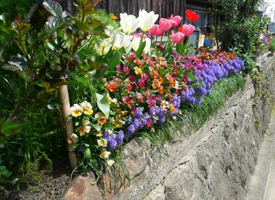 バラ花壇正面から