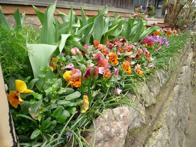南花壇3月