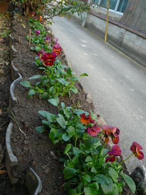 南花壇11月
