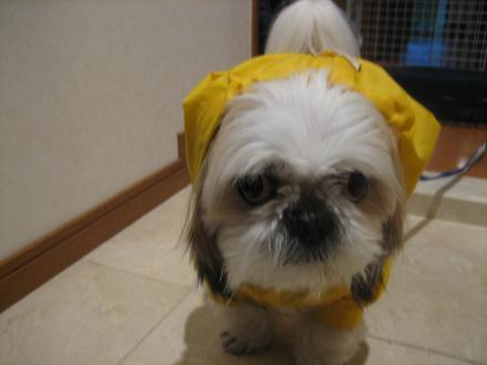 雨散歩前1