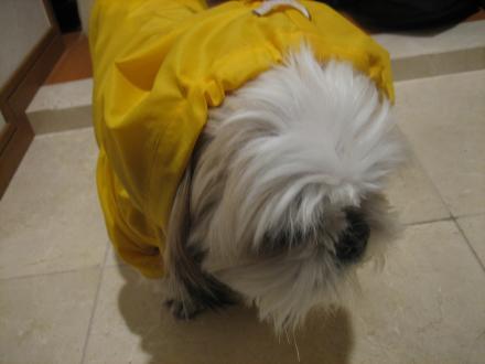 雨散歩前2