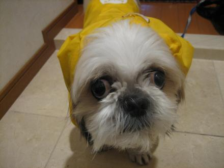 雨散歩前3