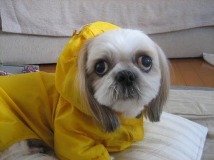 雨散歩前4