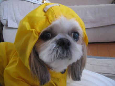 雨散歩前5