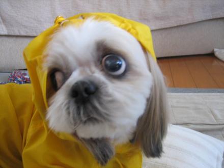 雨散歩前6