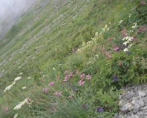唐松岳のお花畑 クリックすると大きくなります。