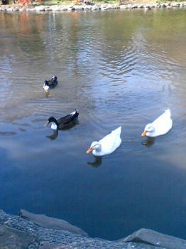 有栖川公園 鳥