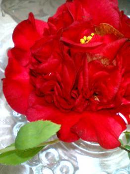 我が家 椿の花