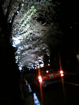 アークヒルズ 桜