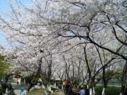haishugongyuan
