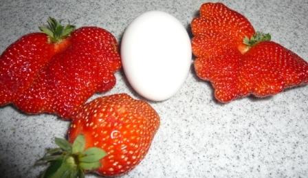 巨大イチゴ2