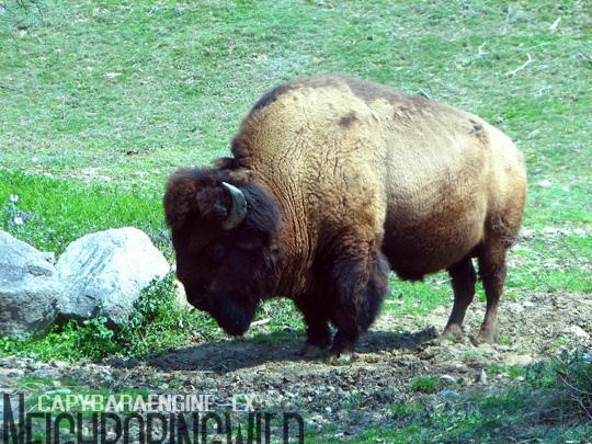 safari021.jpg