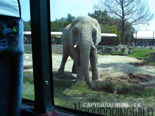safari024.jpg