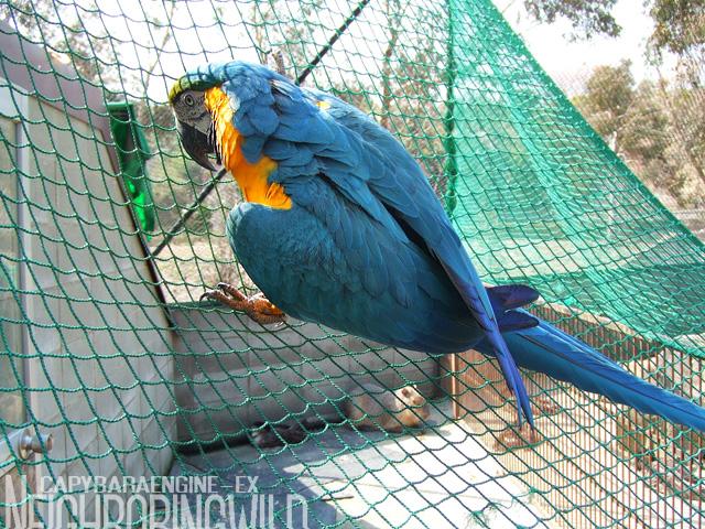 safari036_20080503181748.jpg