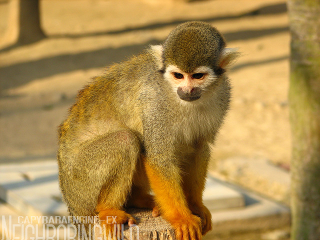 safari042.jpg