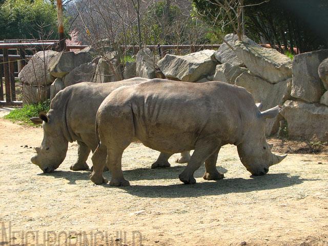 safari067.jpg