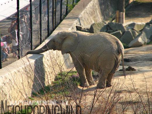 safari070.jpg