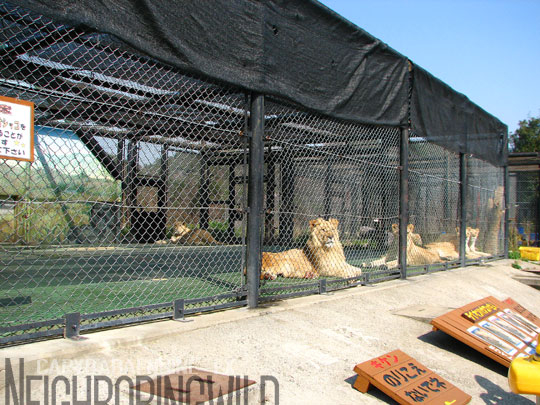 safari075.jpg