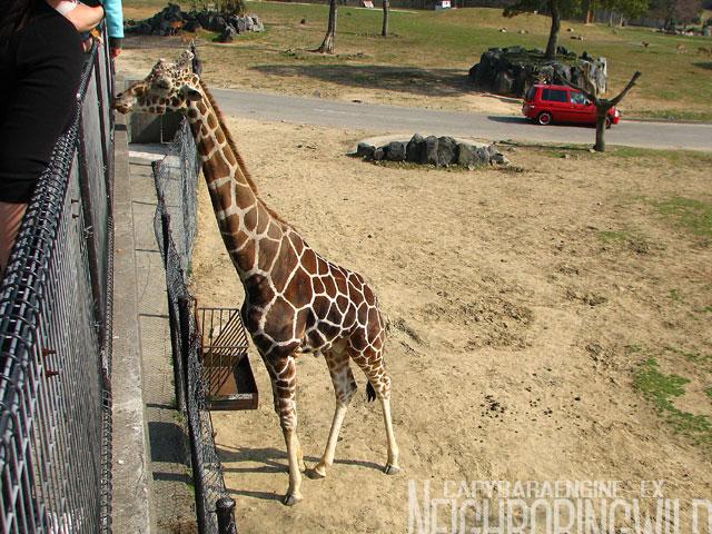 safari081.jpg