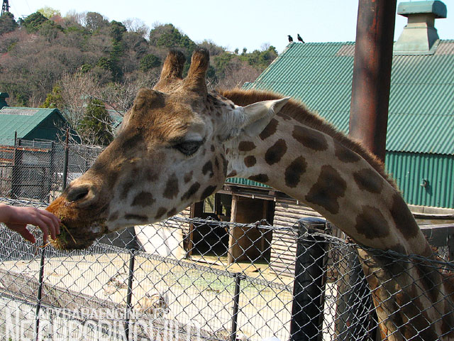 safari082.jpg