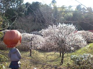 今年の一発目は梅の花見