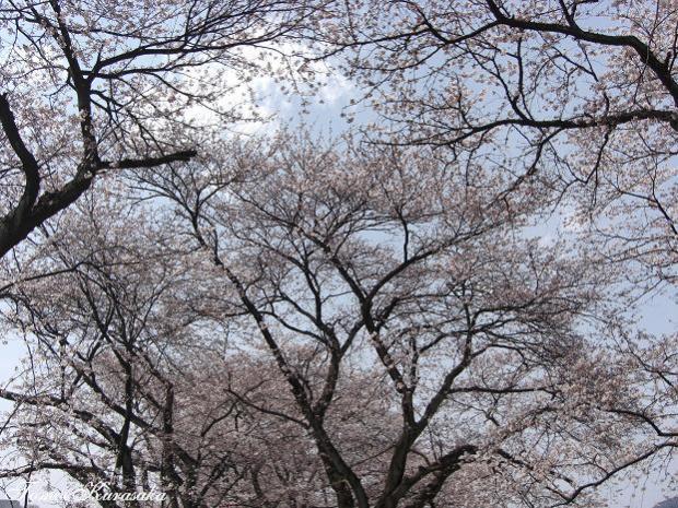 一人お花見2008