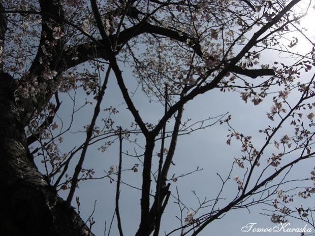 2008.04.05お花見