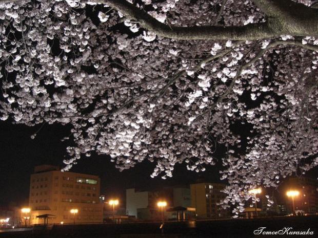 桜2008夜