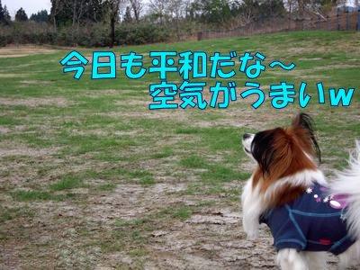 2008042911.jpg