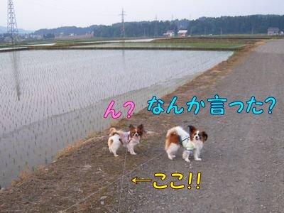 200805235.jpg