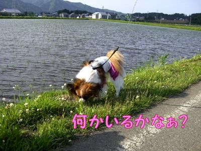 200805272.jpg