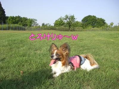 2008060311.jpg