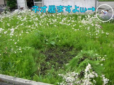 2008060711.jpg