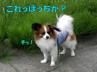 2008060715.jpg