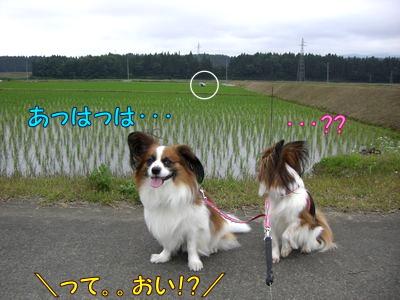 200806205.jpg