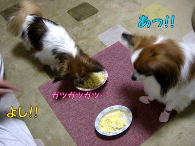 2008070611.jpg