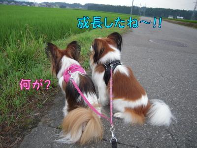 200807204.jpg