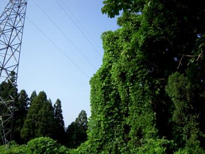 200807256.jpg
