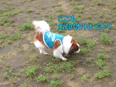 200807288.jpg