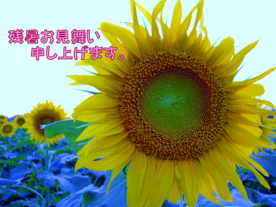 20080811131.jpg