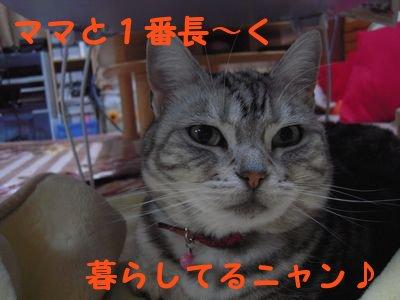20084103.jpg