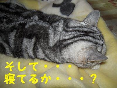 20084106.jpg