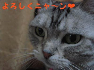 20084108.jpg